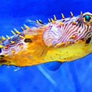 Magic Puffer - Fish Art By Sharon Cummings Art Print