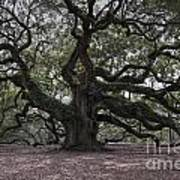 Magical Angel Oak Art Print