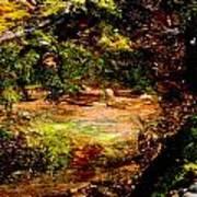 Magical Forest - Myth - Fantasy Art Print