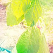 Magical Leaves Art Print