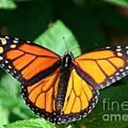 Magical Monarch Art Print