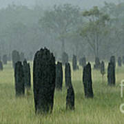 Magnetic Termite Mounds Art Print by Bob Christopher
