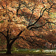 Magnificent Autumn Art Print by Anne Gilbert