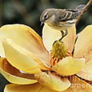 Magnolia And Warbler Photo Art Print