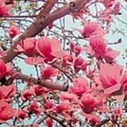 Magnolia Blossoms In Spring Art Print