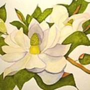 Magnolia Cluster Art Print