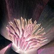 Magnolia Flower - Photopower 1821 Art Print