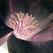 Magnolia Flower - Photopower 1825 Art Print