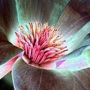 Magnolia Flower - Photopower 1844 Art Print