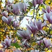 Magnolia Maidens In A Border Art Print