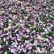 Magnolia Petals Art Print