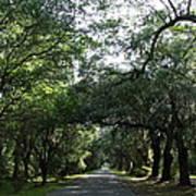 Magnolia Plantation Road Art Print