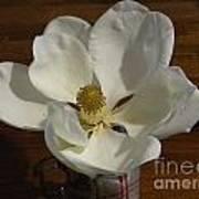 Magnolia Still 1 Art Print