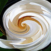 Magnolia Study No 1 Art Print by Chad Miller