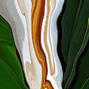 Magnolia Study No 4 Art Print
