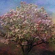 Magnolia Tree In Bloom Art Print