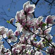 Magnolia Twig Art Print