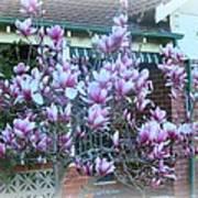 Magnolias At Home Art Print