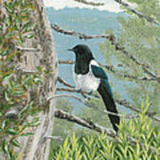 Magpie In Alaska Art Print
