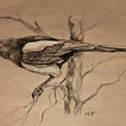 Magpie Sketch Art Print
