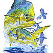 Mahi Mahi Print by Carey Chen