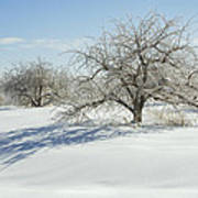 Maine Apple Trees Covered In Ice And Snow Art Print