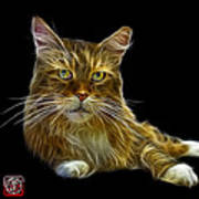 Maine Coon Cat - 3926 - Bb Art Print