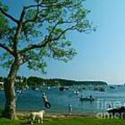 Maine Summer Day At Mackerel Cove   Art Print