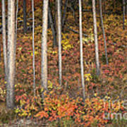 Majestic Autumn In The Grand Tetons Print by Sandra Bronstein