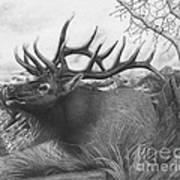 Majestic Bull Elk Art Print