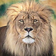 Majestic King Print by Everet Regal