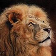 Majestic Lion Art Print by David Stribbling