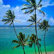 Majestic Palm Trees Art Print