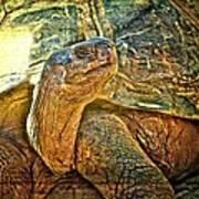 Majestic Tortoise Art Print