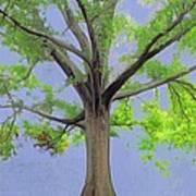 Majestic Tree With Birds Nest Art Print
