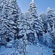 Majestic Winter Wonderland Art Print