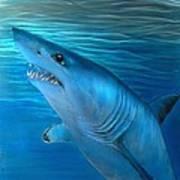 Mako Shark Art Print
