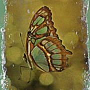 Malachite - Flying Jewel Art Print