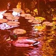 Malard Duck On Pond 3 Art Print