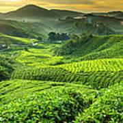 Malaysia, Pahang, Cameron Highlands Art Print