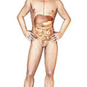Male Body Standing, With Full Digestive Art Print
