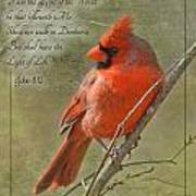 Male Cardinal On Twigs With Bible Verse Art Print