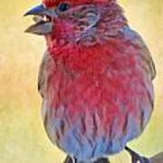 Male Housefinch - Digital Paint Art Print