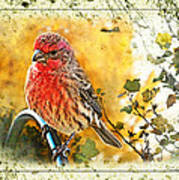 Male Housefinch Photoart Art Print