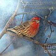 Male Housefinch With Verse Art Print