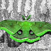 Male Moth Green Art Print by Al Powell Photography USA