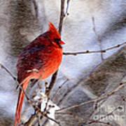 Male Northern Cardinal Oil Paint Effect Art Print