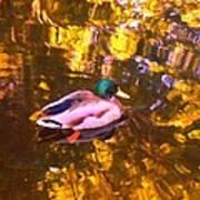 Mallard Duck On Pond 1 Art Print