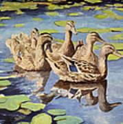Mallards Art Print