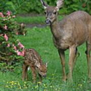 Mama Deer And Baby Bambi Art Print